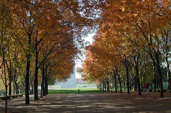 Urban forests create an archway of trees at Jefferson National Expansion Memorial.